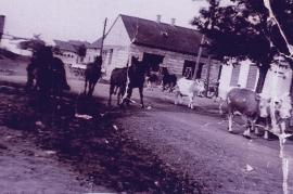 1950er Kühe und Pferde im Dorf 17WE