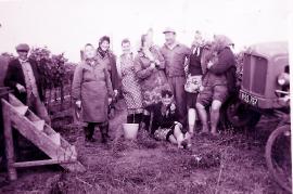 1960er bei der Weinlese 7LEN