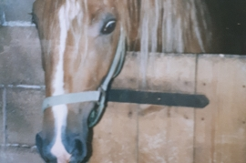 2 Pferd